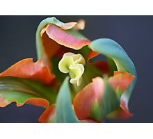 Tulip with an artistic mind Photographic Print