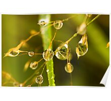 Plant, Wavy Hair grass, Seed heads, raindrops Poster