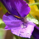 Purple Rain  by Lady  Dezine