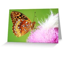 Spangled Fritillary butterfly on thistle Greeting Card