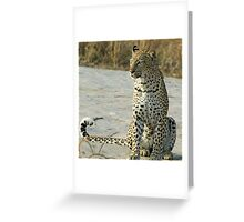Young confident adult leopard! Greeting Card