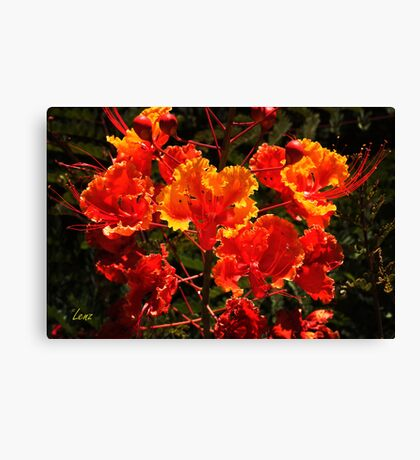 Mexican Red Bird Of Paradise Canvas Print