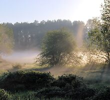 Morning Fog by Robert  Miner