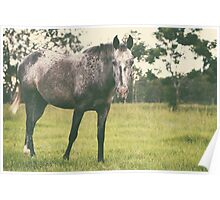 Single horse grazing Poster