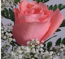 Peach Rose by JustGriz