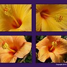 Hibiscus Collage  by Sherri Fink