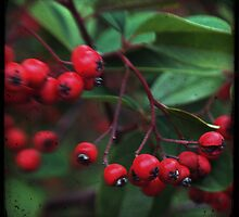 Red Berry Blur by pnjmcc