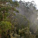 Tree Tops by Ian Fraser
