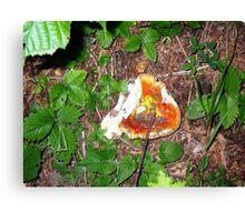 Wild fungo Canvas Print