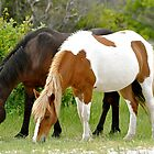 Assateague's Painted Pony by Monte Morton