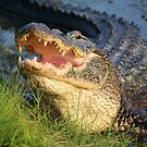 Dem Gators gots a Mouth Full of Big Teefers by Paulette1021