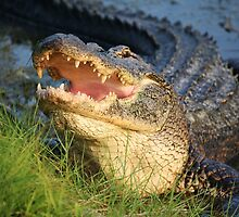 Dem Gators gots a Mouth Full of Big Teefers by Paulette1021
