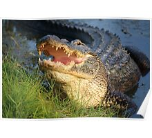 Dem Gators gots a Mouth Full of Big Teefers Poster