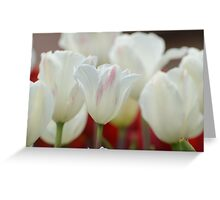 White Tulips in Spring Greeting Card
