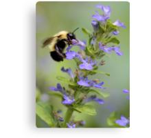 Blue Ajuga -- Bumble Bee Canvas Print