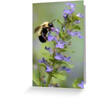 Blue Ajuga -- Bumble Bee Greeting Card