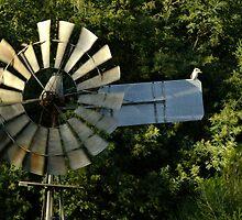 Kookaburra sits on the old windmill by Josh Nicol