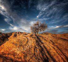 Tree Top by Bob Larson