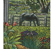 Pams path to the stable-miniature pastel painting Photographic Print