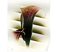 Calla Lilly III Poster