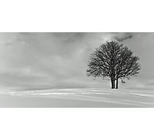 Cold and Alone Photographic Print