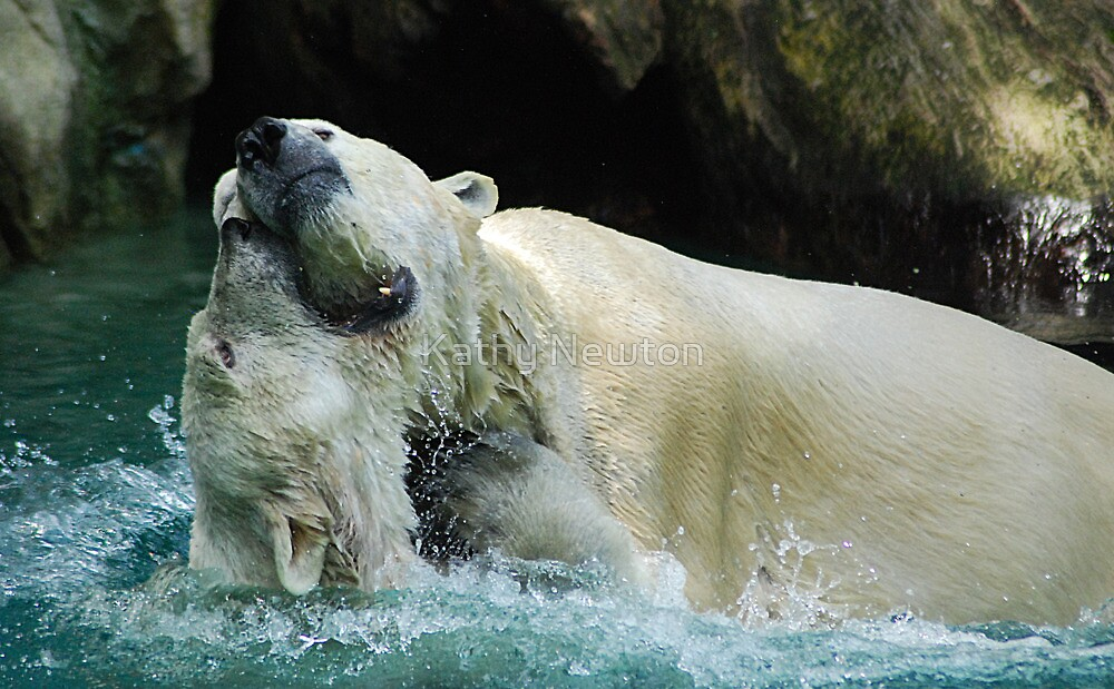 Polar Play Cincinnati Zoo by Kathy Newton