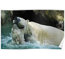 Polar Play Cincinnati Zoo Poster