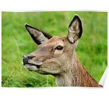 Red Deer Profile Poster
