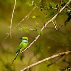 Little Green-bee Eater by liza1880