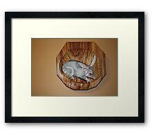 The Australian  Bilby, on the endangered list. Framed Print