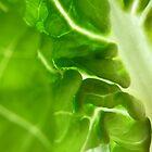 Inside Lettuce II by Lena Weiss