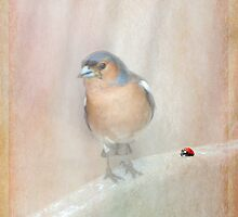 Chaffinch and Ladybird by Catherine Hamilton-Veal  ©