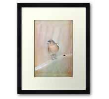 Chaffinch and Ladybird Framed Print