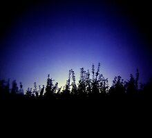Evening Glow by iamsla