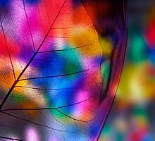 Multicolored fragility by dominiquelandau