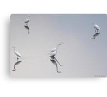 Reflections of Egrets. Canvas Print