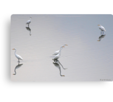 Reflections of Egrets. Canvas Print