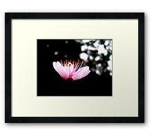 Night Blossom Light Framed Print