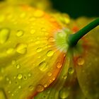 Yellow Rain Drops by Paul Revans