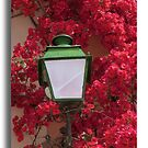 Blossom from Corfu by John44