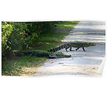 Mama and Baby Alligator Crossing the Road Poster