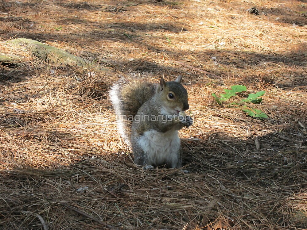 Squirrel by imaginarystory