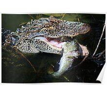 Alligator enjoying his just caught Catfish Poster