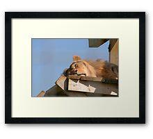 The Sunbather Framed Print