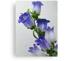 Purple Blossums Canvas Print