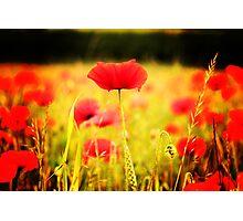 New Bloom Photographic Print