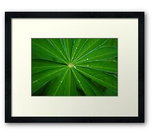Leaves of Lupin Framed Print