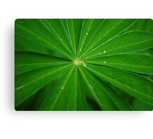 Leaves of Lupin Canvas Print