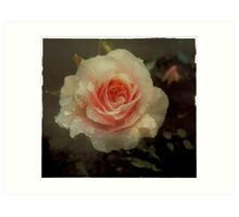 Old fashioned pink rose Art Print