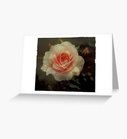 Old fashioned pink rose Greeting Card